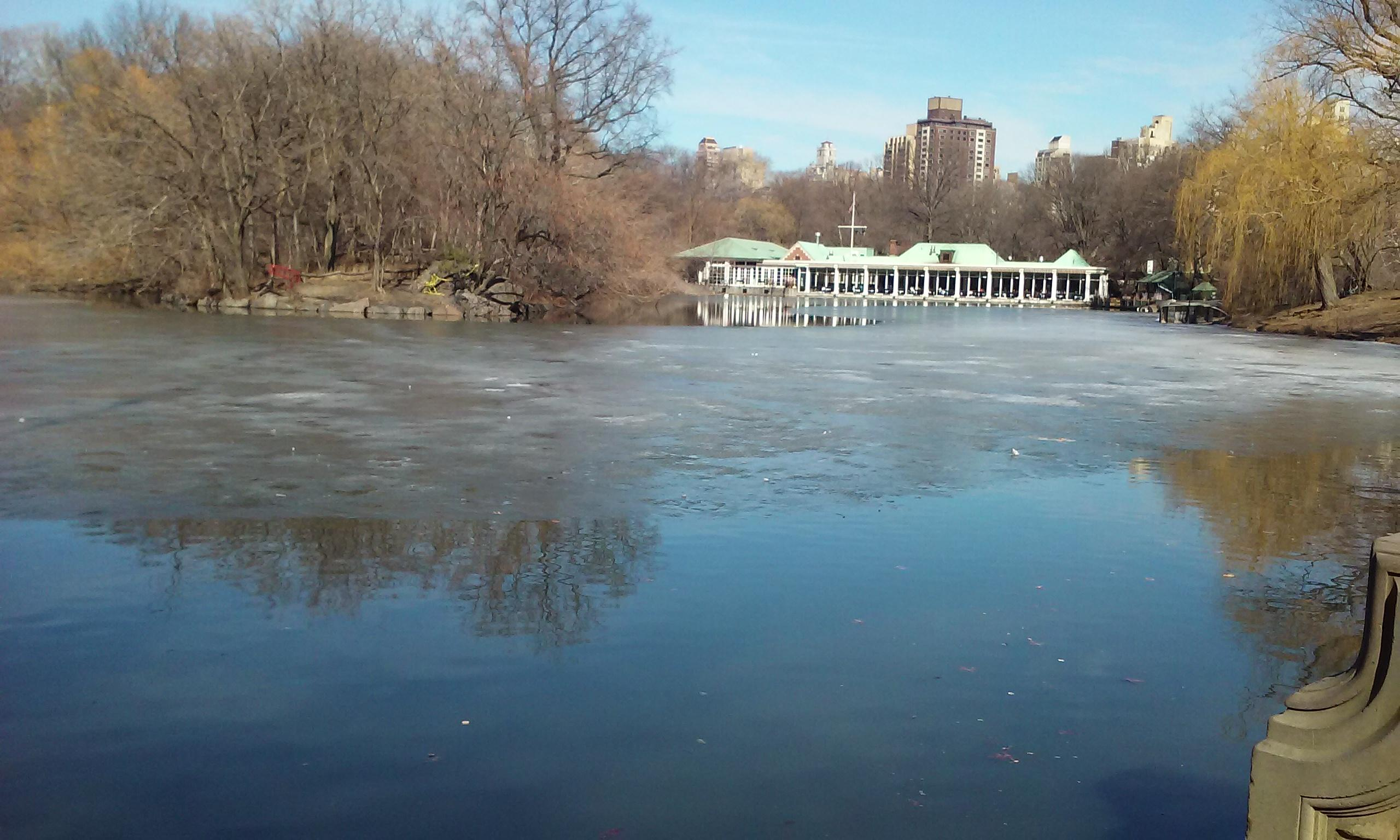 Rent a boat or watch ducks at the duck pond in Central Park.
