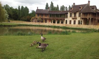 Geese at Marie Antoinette's English Hamlet at the Palace of Versailles.