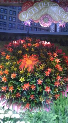 Orange flowers at Macys.